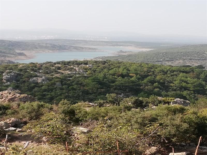 Çanakkale Ayvacık Ahmetçe Çaltepe/Satılık Tarla