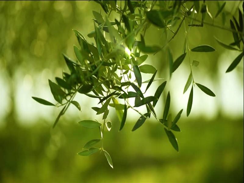 Çanakkale Ayvacık Nusratlı/Satılık 650 m2 Bahçe