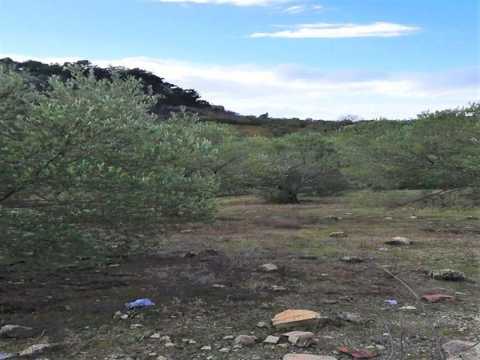 Çanakkale Ayvacık Kayalar/Satılık 1,3 Dönüm Zeytinlik