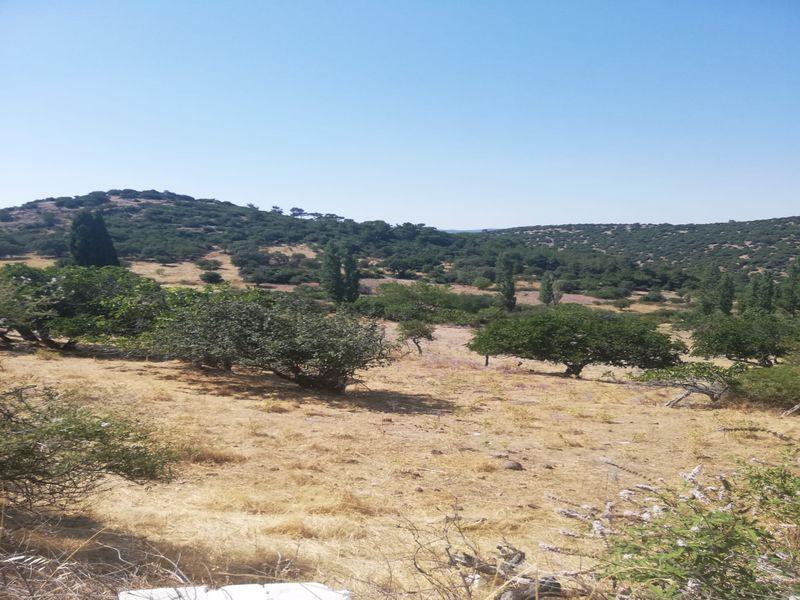 Çanakkale Ayvacık Paşaköy/Satılık 6 Parsel İmarlı Arsa