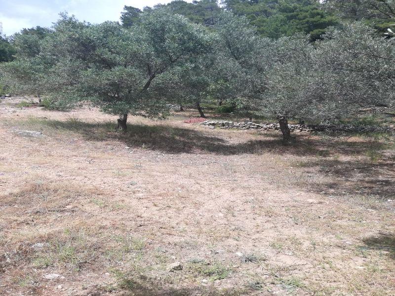 Çanakkale Ayvacık Bahçedere/Satılık 106 m² Zeytinlik